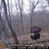 Opening Day Spring Gobbler Season 2011